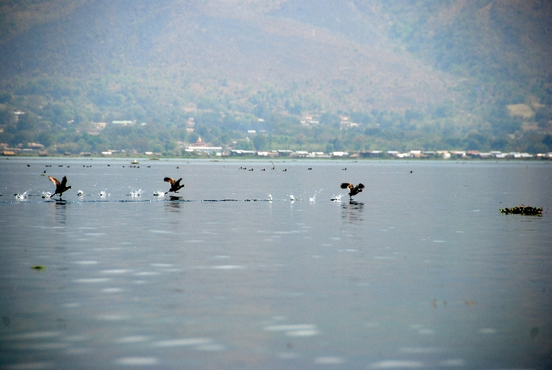 inle_20120307_116